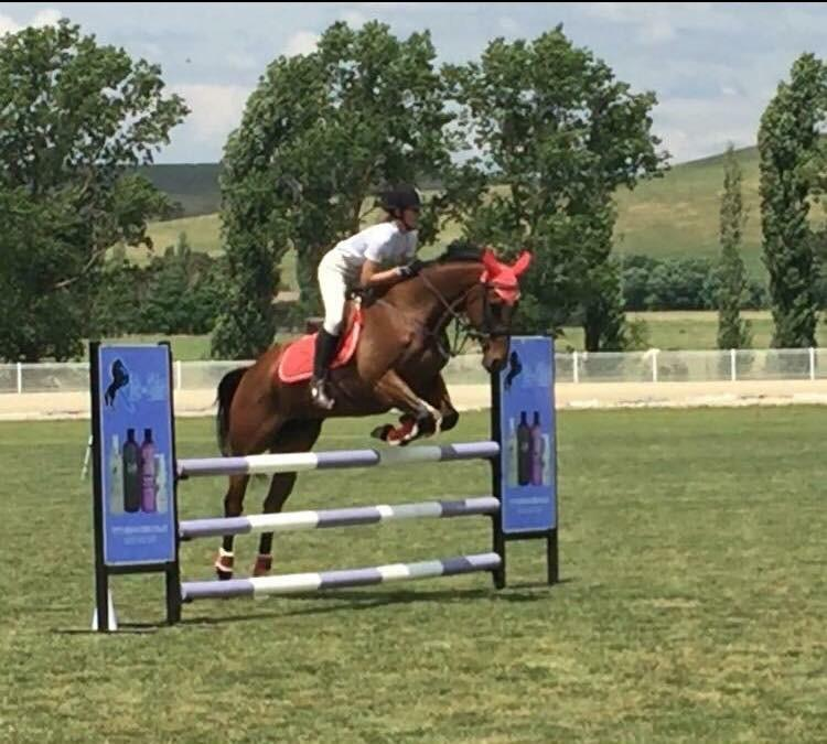 Energetic show jumper/ODE