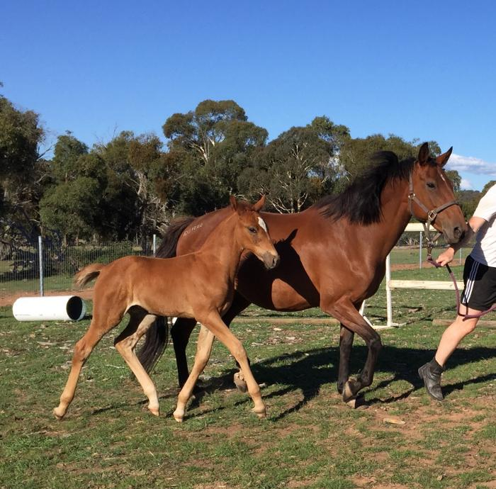 LL River Tam - WB filly foal by Riverside (Imp)