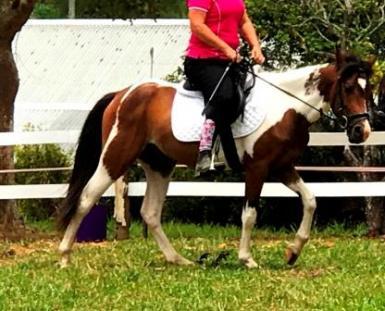Bonnie under saddle