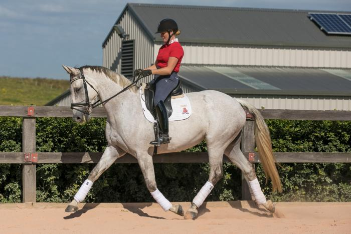 VERSATILE AND PROVEN HANOVERIAN SPORT HORSE