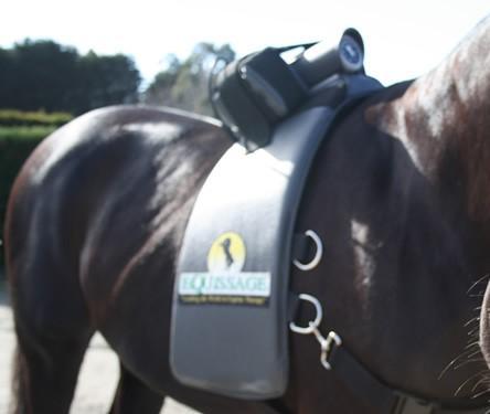 Equissage Horse Massage Equipment