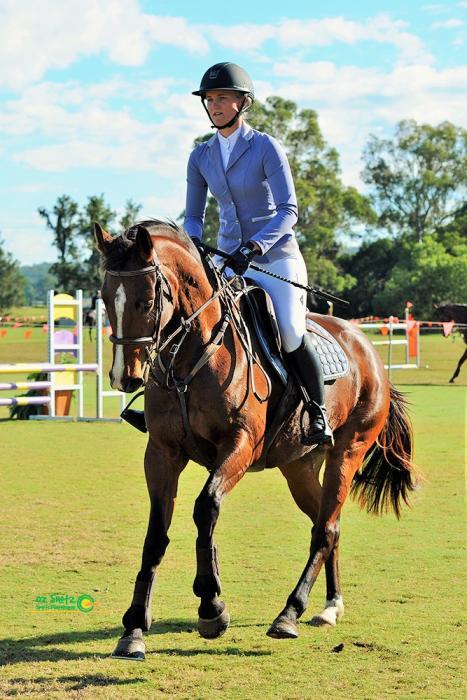 Quality 5 year Warmblood mare