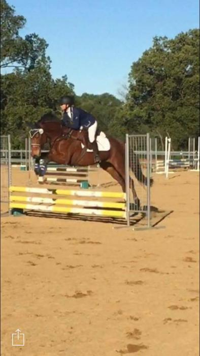 Potential Eventer