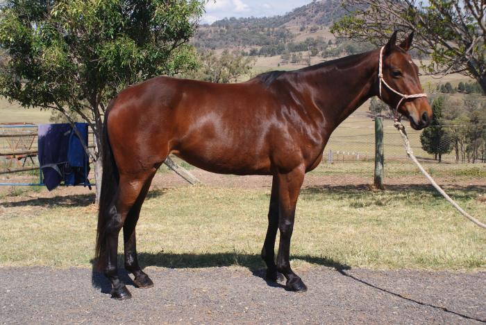 Tipsy - Quiet All Rounder Mare