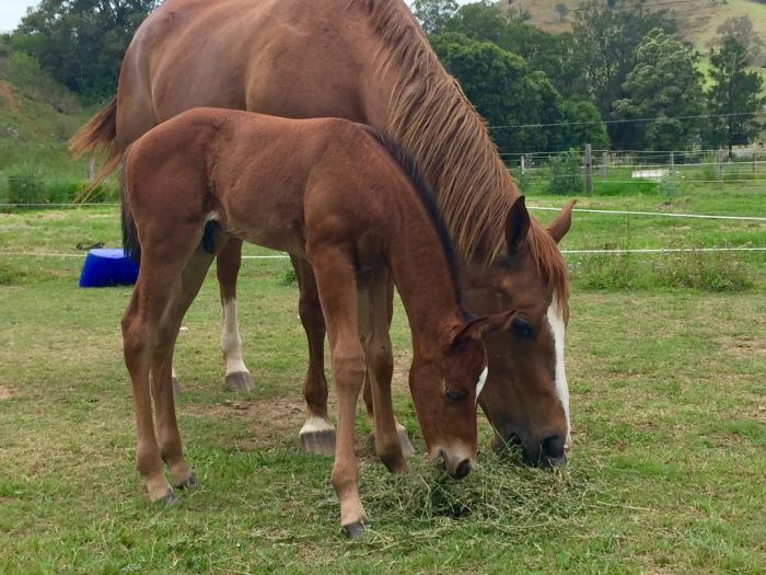 QH Mare & Foal Package