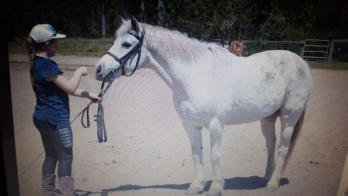 Super White Pony