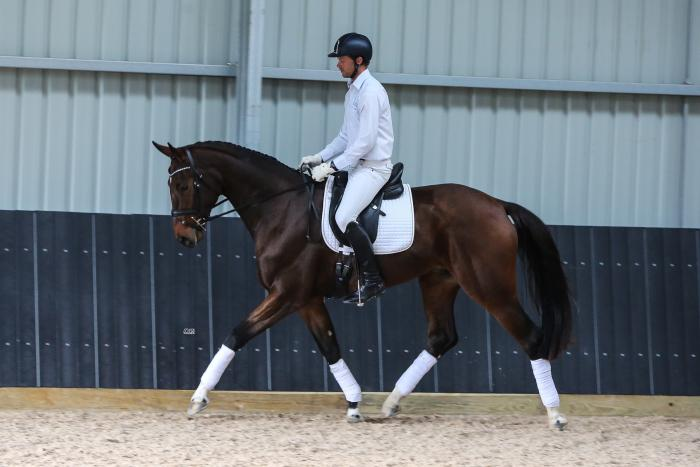 EXCEPTIONAL MOVING 3YR OLD WARMBLOOD GELDING