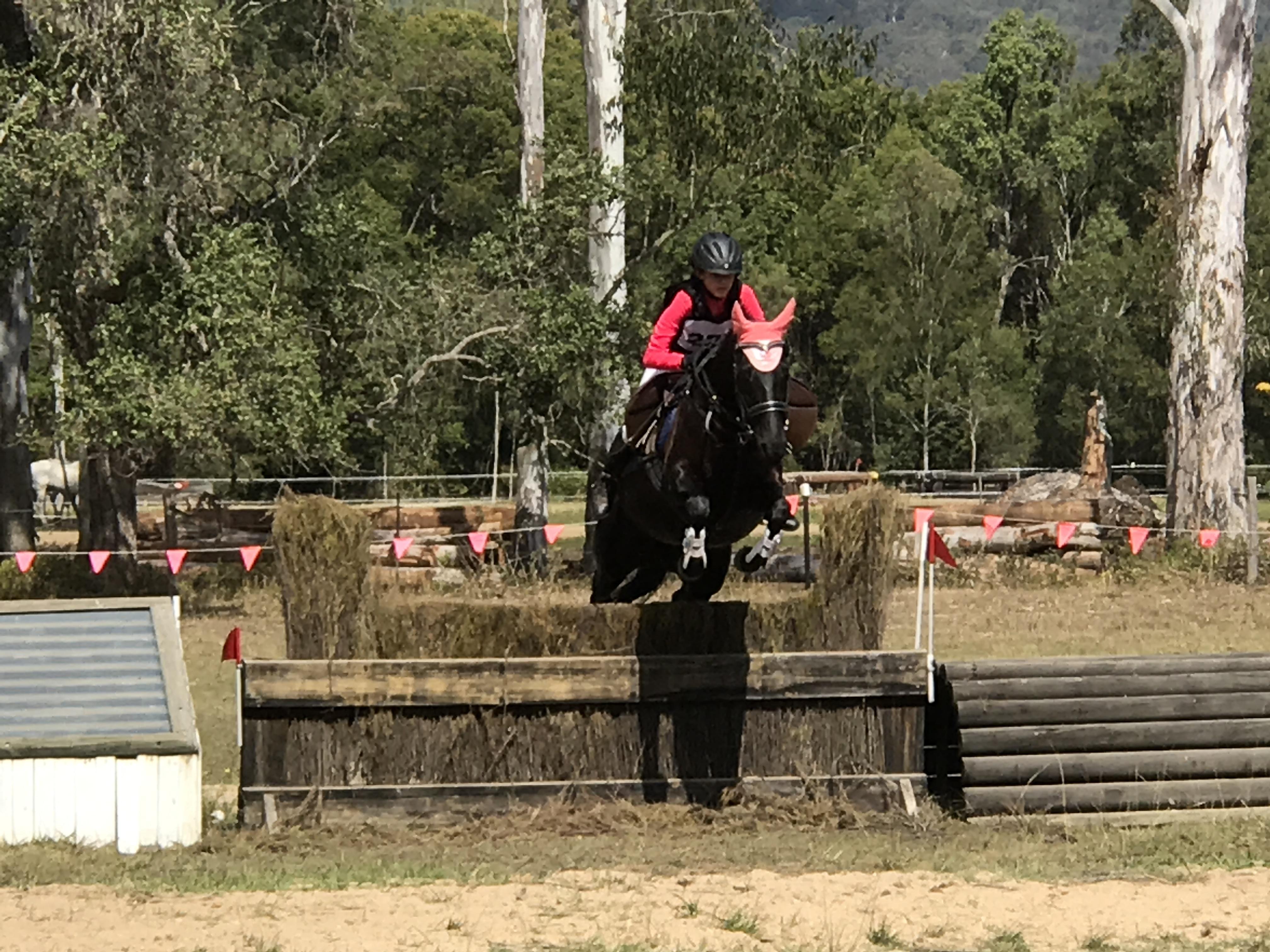 Black Stock Horse Mare
