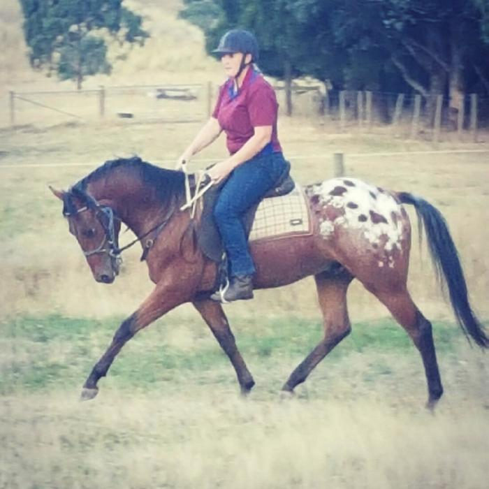 Beautiful Appaloosa Gelding * Potential Plus *