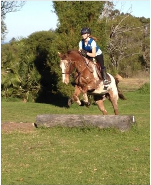 Perfect family horse or child's horse-All rounder