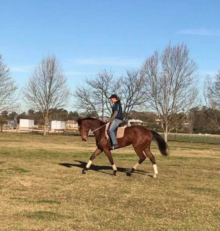 Big quite easy mare