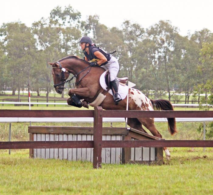 Appaloosa Showjumper/Eventer
