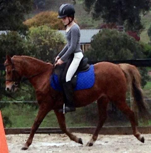 Ruby Chestnut Welsh 12.2hh 12yo Mare All Rounder