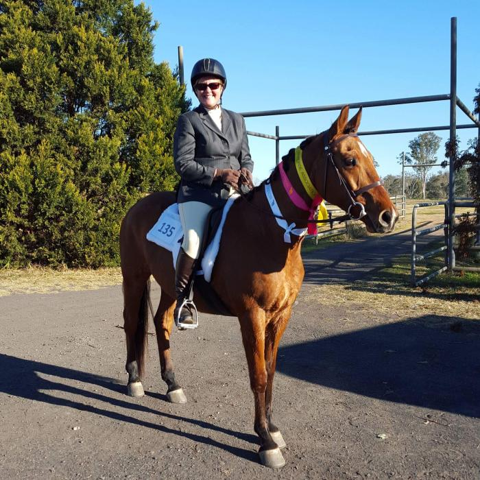 Quarter horse Lovely Mare 12 Years old   For lease or sale good all rounder
