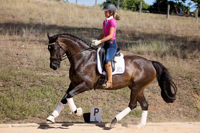 Stunning Mare - Dressage OR Show!!