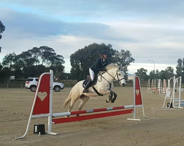 Highland pony superstar allrounder