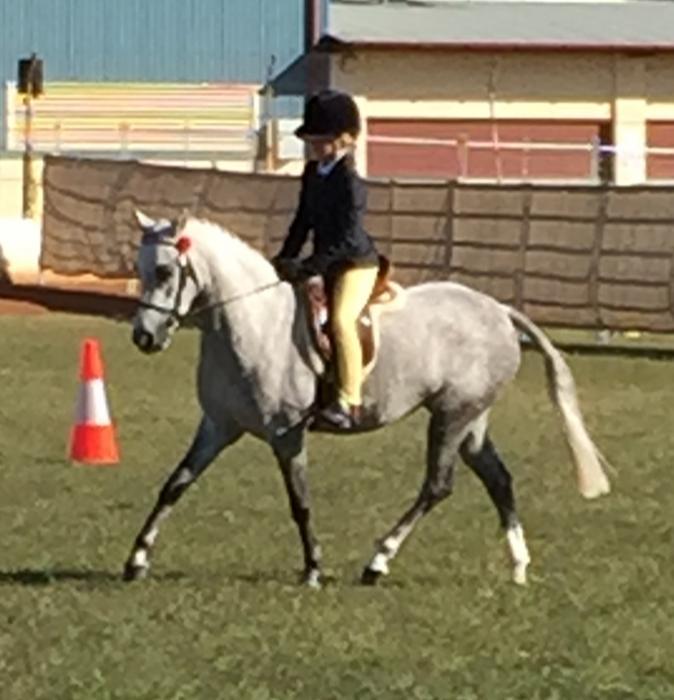 12hh Aust Pony Mare