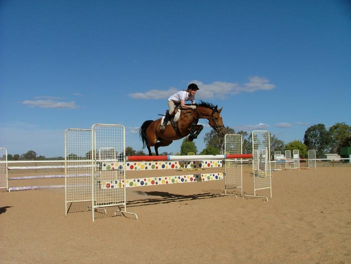 Talented Showjumping Brood Mare