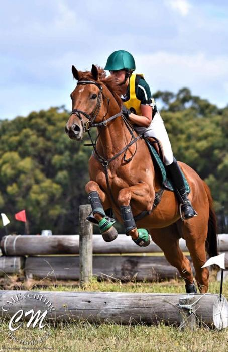 Super sweet Chestnut Thoroughbred gelding