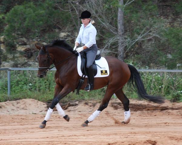 Elegant Warmblood Brood Mare - TS WELCOME