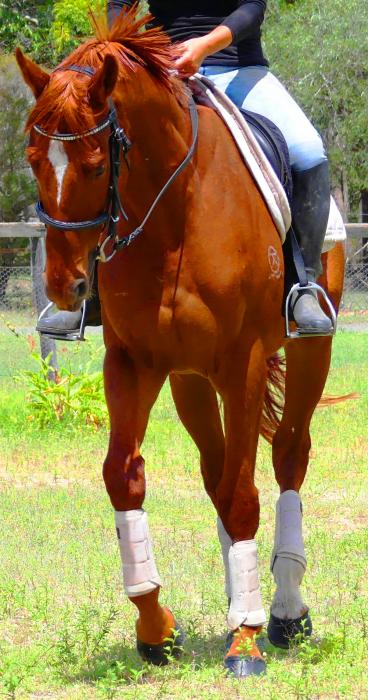 4 BEGINNERS HORSES / CONFIDENCE BOOSTERS FOR SALE