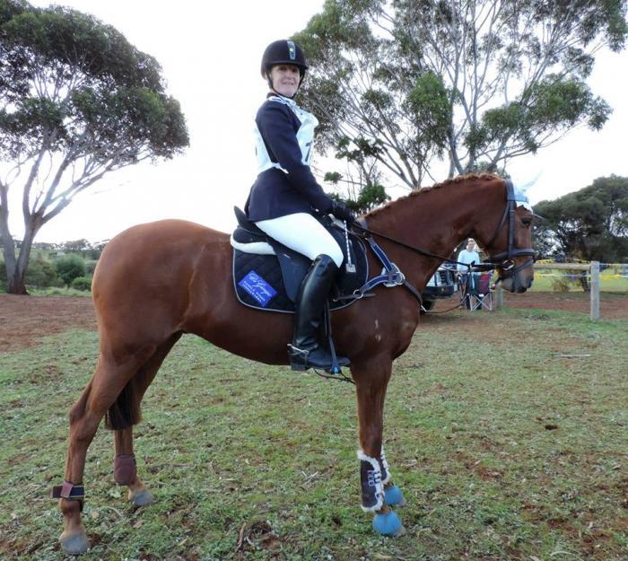 Riding Pony Gelding