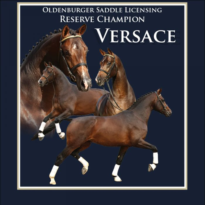 Versace - Reserve Champion Oldenburger