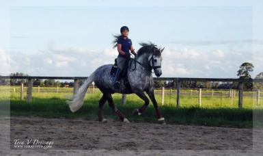 Ridden by Para Equestrian Victoria Davies