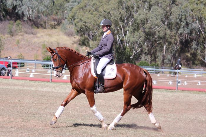 Outstanding Dressage Mare - Compete & Breed