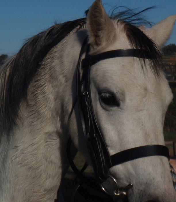 Perfect Second Pony