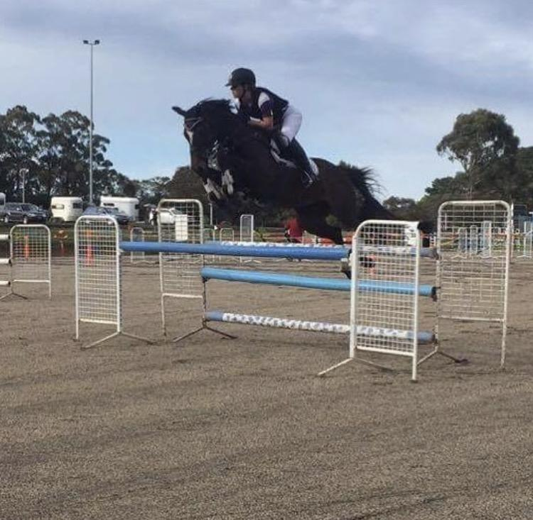 Competitive show jumper !