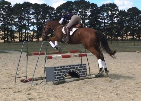 Quality young jumping TB  - priced to sell