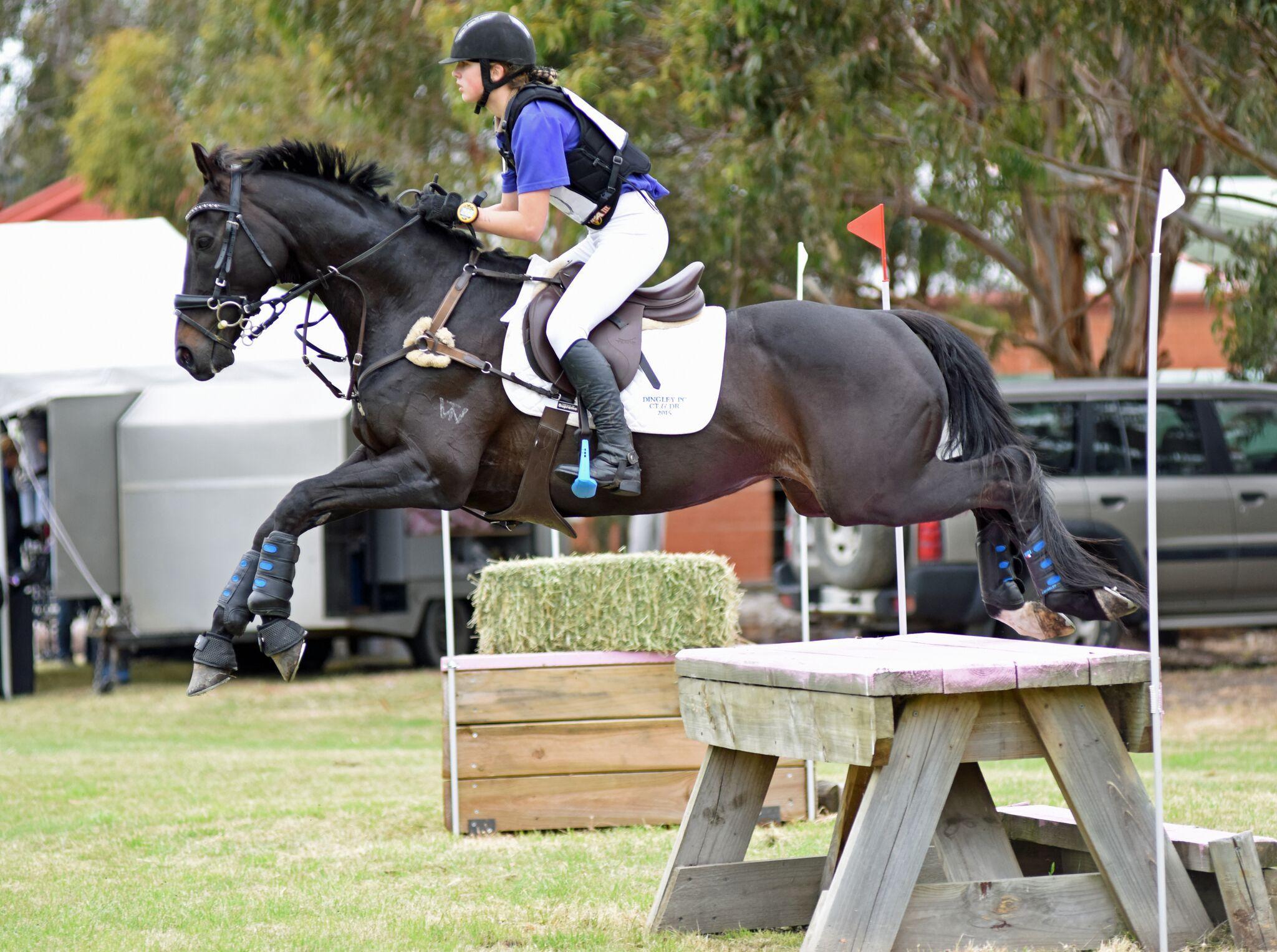 Super Interschool Performance Horse