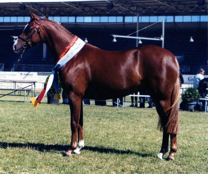 Broodmare Imported Bloodlines
