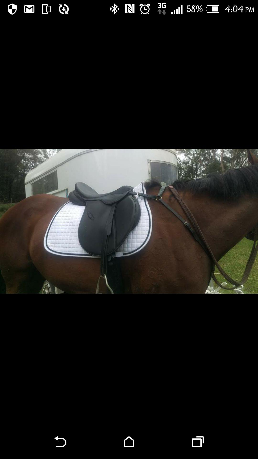 "Thorowgood AP 17"" Saddle"