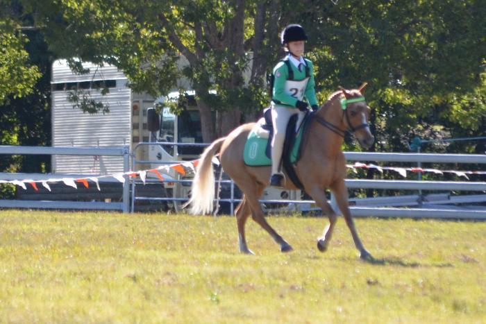 Versatile Allrounder Pony
