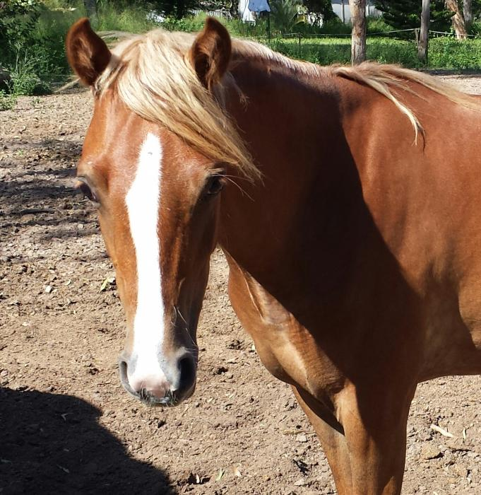 Beautiful RP 2 yrs old Filly
