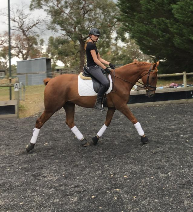 Aastaron - a super young dressage horse