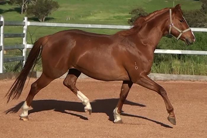 WB mare by Ferrero Rocher - price reduced