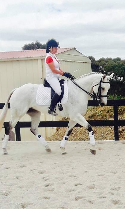 Stunning 8 yo Irish Sport Horse Mare
