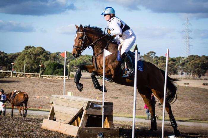 Super pony club mount/eventer