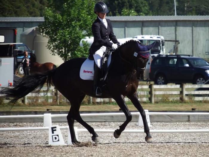 Elegant Dressage Horse