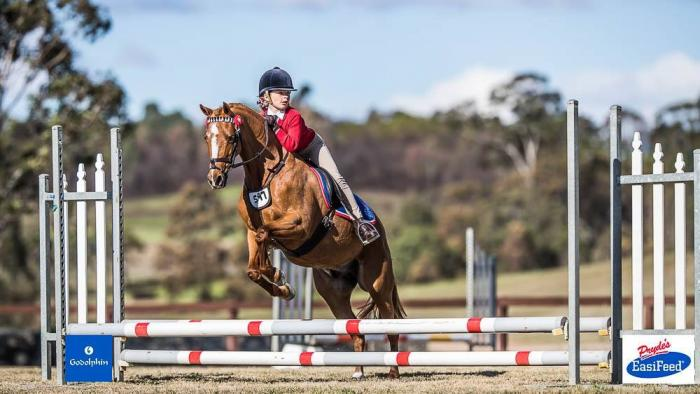 ALL ROUNDER LARGE PONY 13.2HH