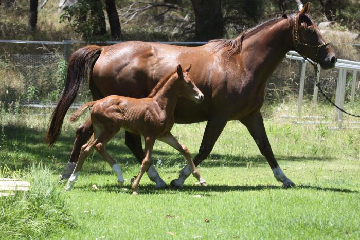 Outstanding weanling filly