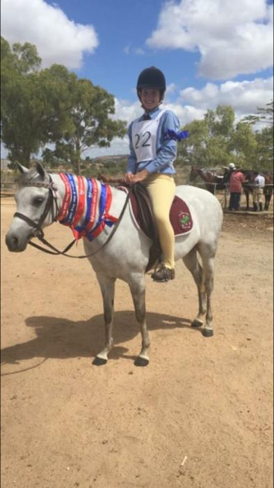 Experienced Show Pony for Sale - Wildwood Seasong