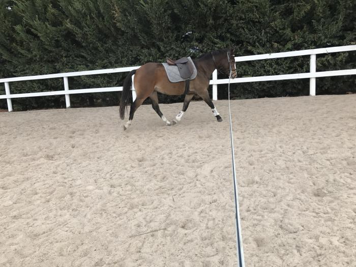 Stunning Pony