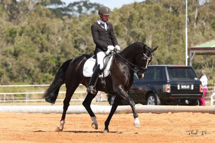Classy FEI Dressage Mount/Schoolmaster
