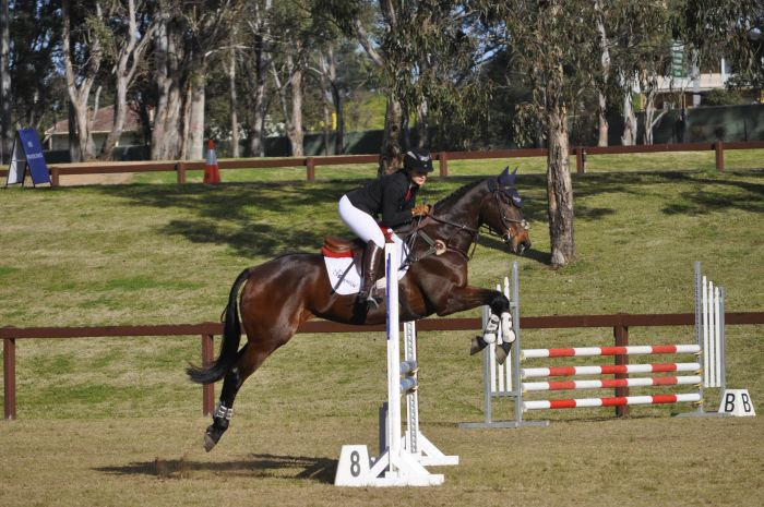 **REDUCED** Competitive Show Jumper **REDUCED**