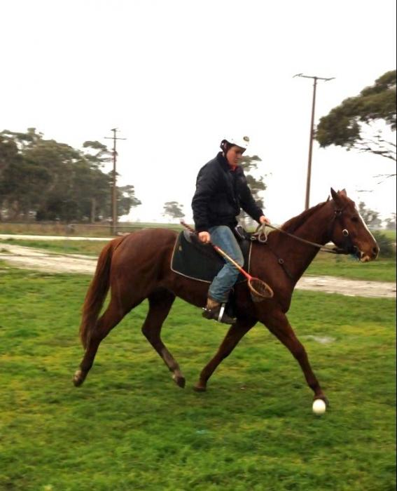 Flashy All Rounder Gelding