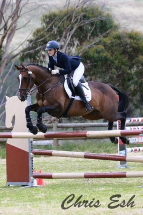 Fantastic Showjumping/Eventing Mare